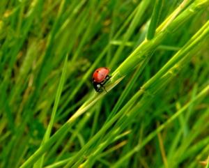 Założenie i pielęgnacja trawnika