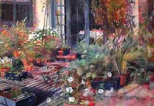 Rośliny balkonowe dla początkujących