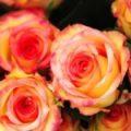 Bukiety z kwiatów