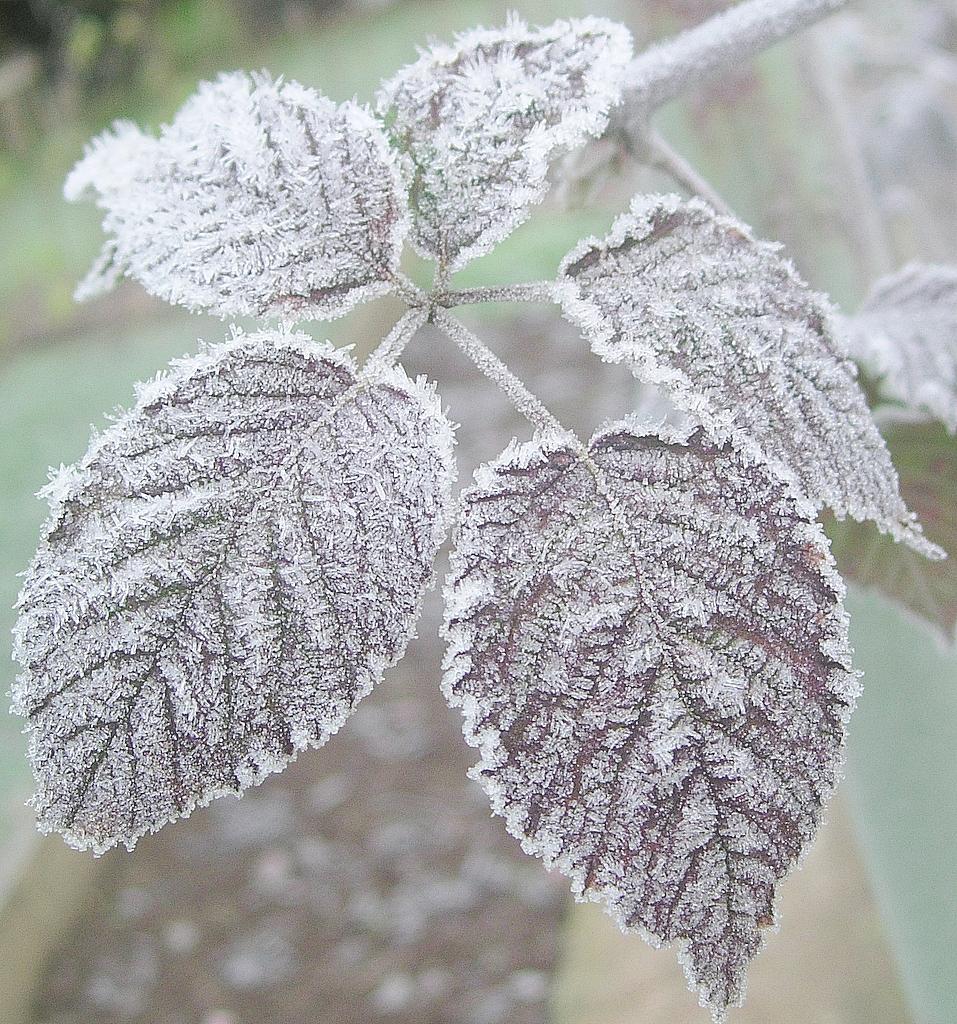 Roslinnosc zimowa potrafi upiekszyc kazdy ogrod