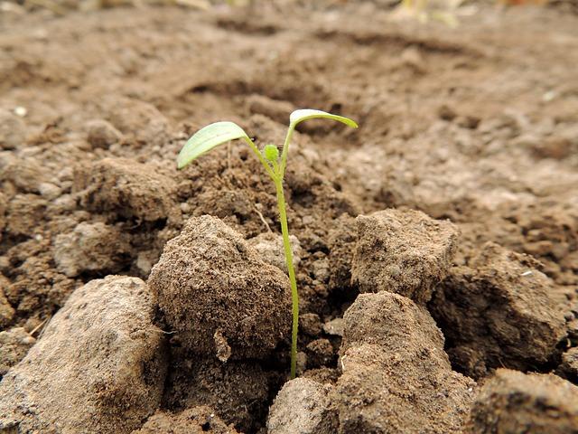 sadzenie roslin