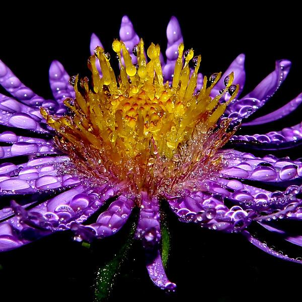 Jakie kwiaty pachną najmocniej?