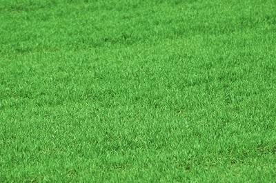 Trawnik zawsze w dobrym stanie