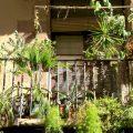Miejski balkon jak prawdziwy ogród, czyli jak odmienić rzadko wykorzystywaną przestrzeń w miejsce letniego relaksu