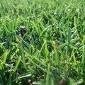 Nawozy do trawy – co musisz o nich wiedzieć?