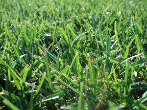 Nawozy do trawy - co musisz o nich wiedzieć? Nawozy do trawy - co musisz o nich wiedzieć