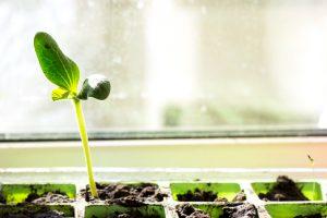 ziemovit wysiewamy rośliny jednoroczne