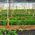 Warzywa do ogródka, które łatwo uprawiać