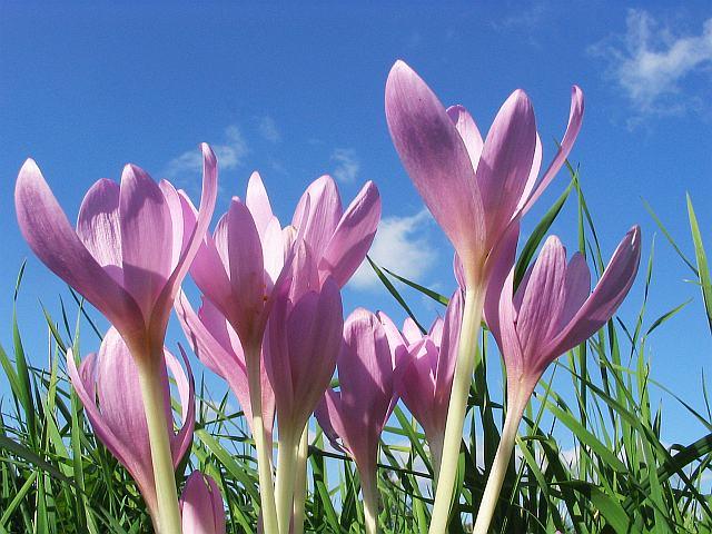 Jakie prace ogrodnicze należy wykonać w marcu?