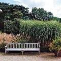 Trawy ozdobne w Ogrodzie