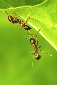 Sposób na mrówki