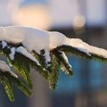 Zimowe prace ogrodowe