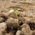 Kiedy sadzić drzewa i jak sadzić rośliny?