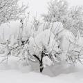 Kolorowy ogród zimą