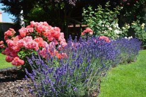 garden-944195_960_720