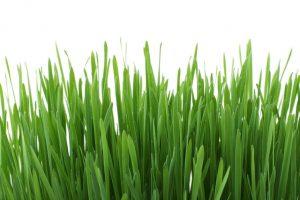 background-close-up-flora-fresh-41324