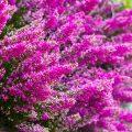 Jakie rośliny kwitną zimą?