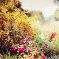 Kwiaty wysiewane jesienią – co trzeba o nich wiedzieć?