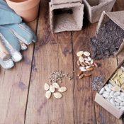 Nasiona kwiatów, warzyw i owoców. Jak i gdzie je kupować?